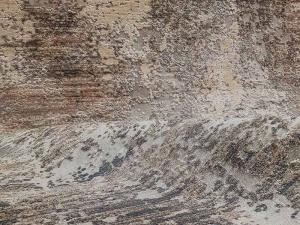 morelli-rugs-senses